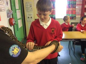 P6 Visit from the Zoo